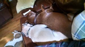 Violet and Charlie sleeping next to me
